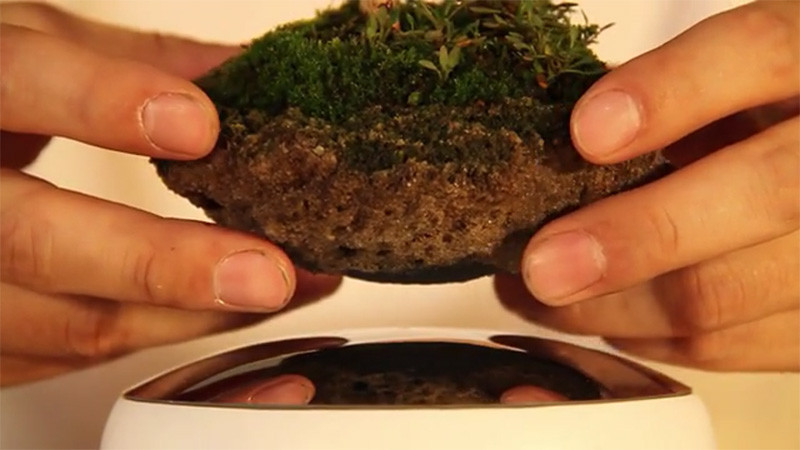 floating-bonsai_220115_02-800x450